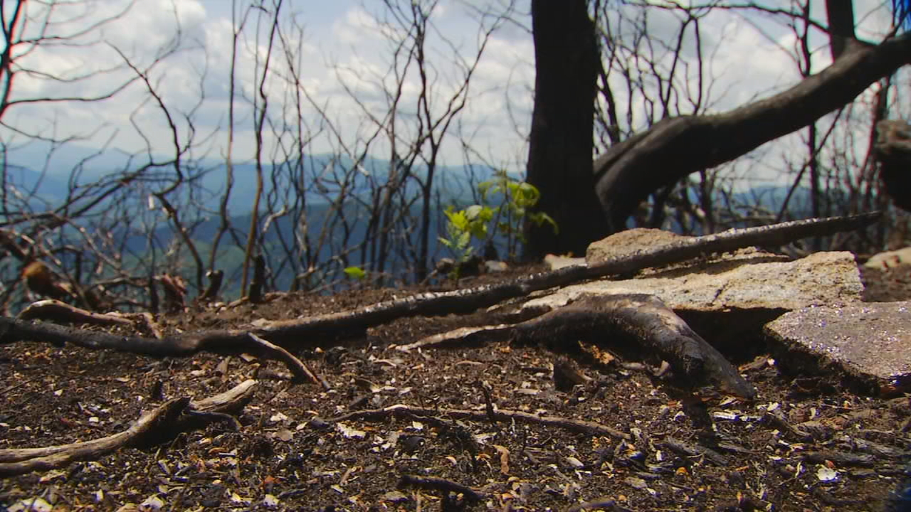 Most of the 22 arsons remain unsolved.  (Photo credit: WLOS Staff)