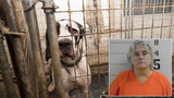 Owner of mansion with 80 neglected Great Danes: I'm innocent