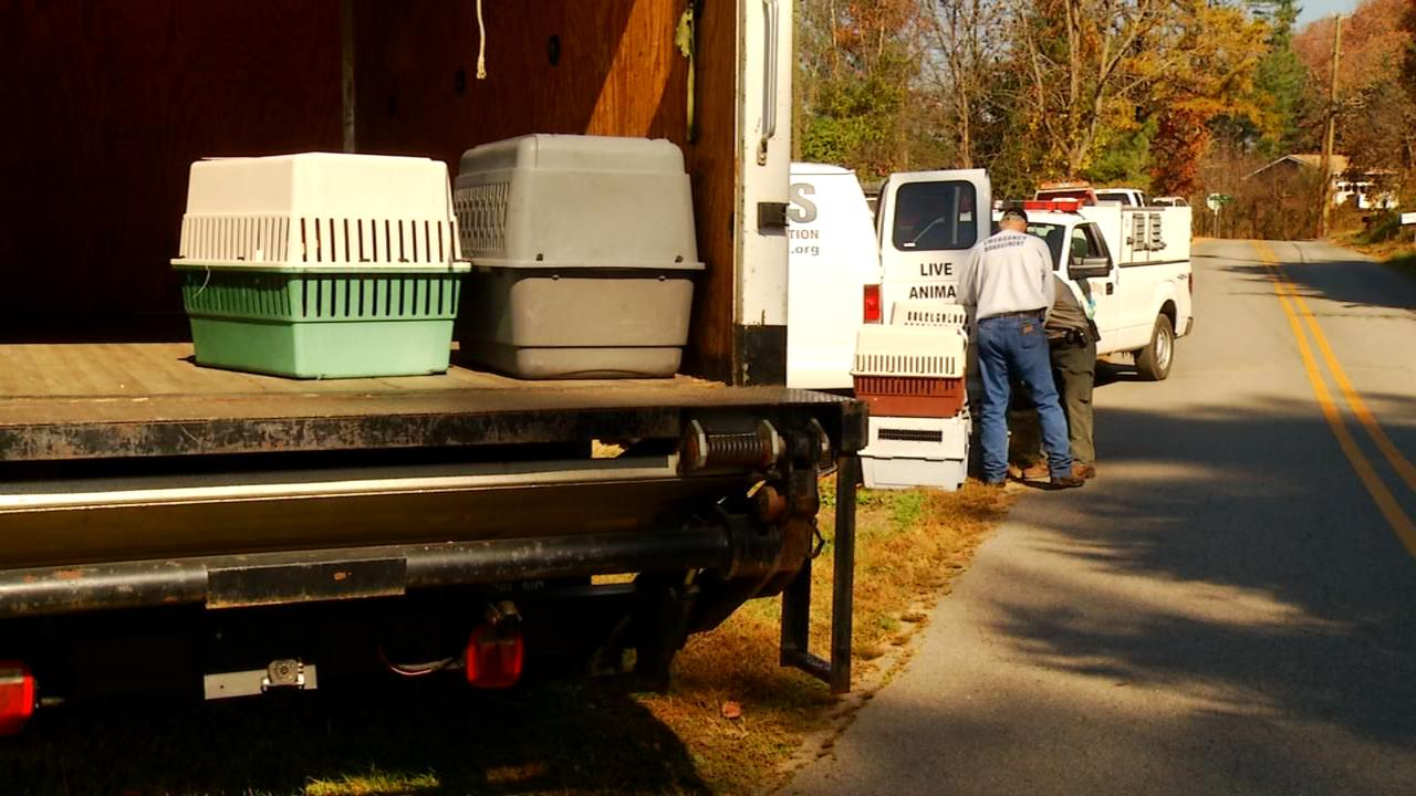 Over 100 dogs were rescued by Haywood County Animal Services from a home in Canton Saturday. (Photo credit: WLOS staff)