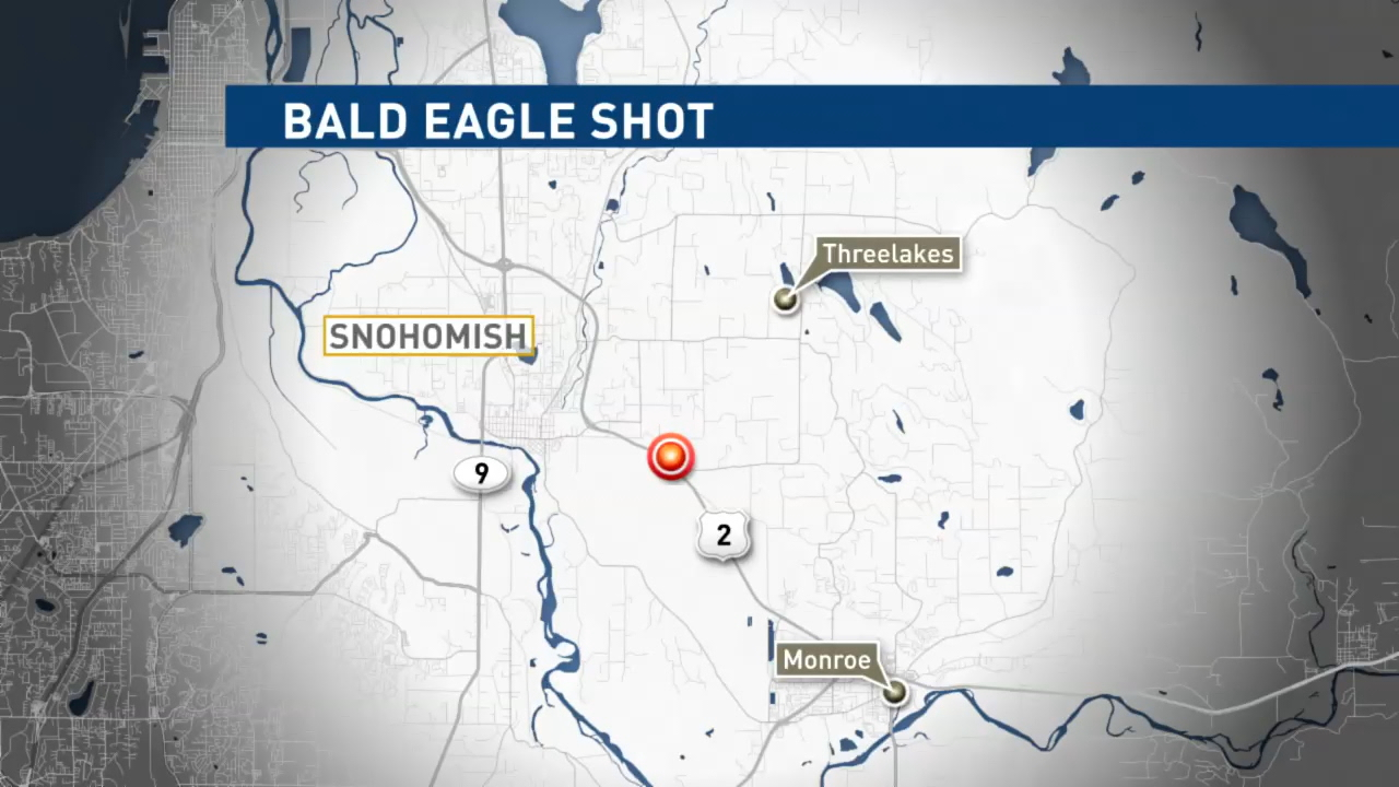 $2,000 reward offered after bald eagle shot, killed in Wash. state (KOMO)