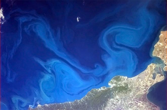 Dr. Seuss-inspired swirls in the Black Sea. (Photo & Caption: Col. Chris Hadfield, NASA)