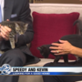 Pet of the Week: Speedy and Kevin need a home