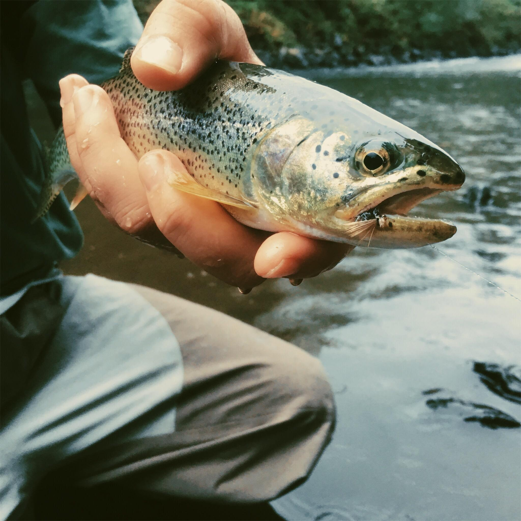 PNW fly fishing hot spots tested and approved for you!(Image: Zoe Pappas / Seattle Refined){ }