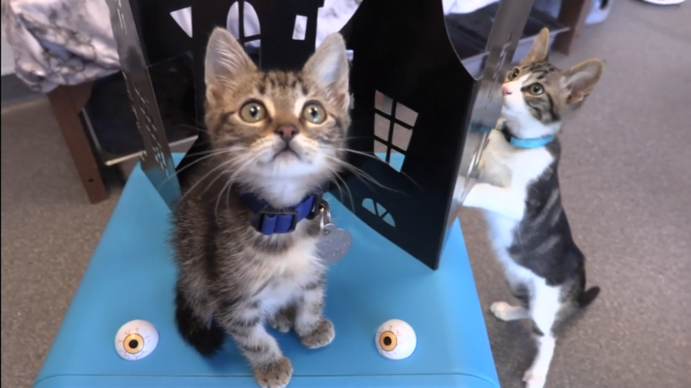 'Haunted Kitten Mansion' calls attention to the influx of homeless cats, kittens in Utah
