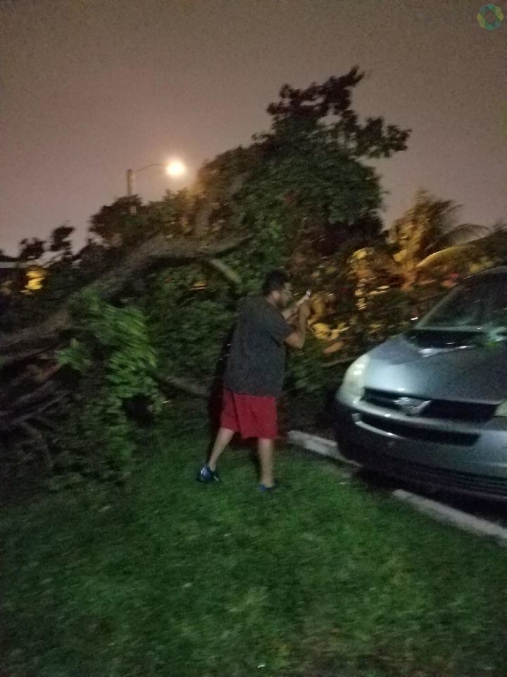 A downed tree in Pompano Beach, FL as the hurricane passes the region (Photo submitted via Burst)