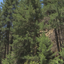 DNR: Washington forests in jeopardy in light of capital budget failure