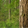 Umpqua Forestry Coalition hosts April 6 forum on forestry management