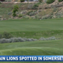 Wildlife officials warn Somersett residents of possible mountain lion sightings