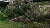 Man saves wife from falling tree in Rhea County