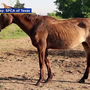 50 horses found dead at North Texas sanctuary