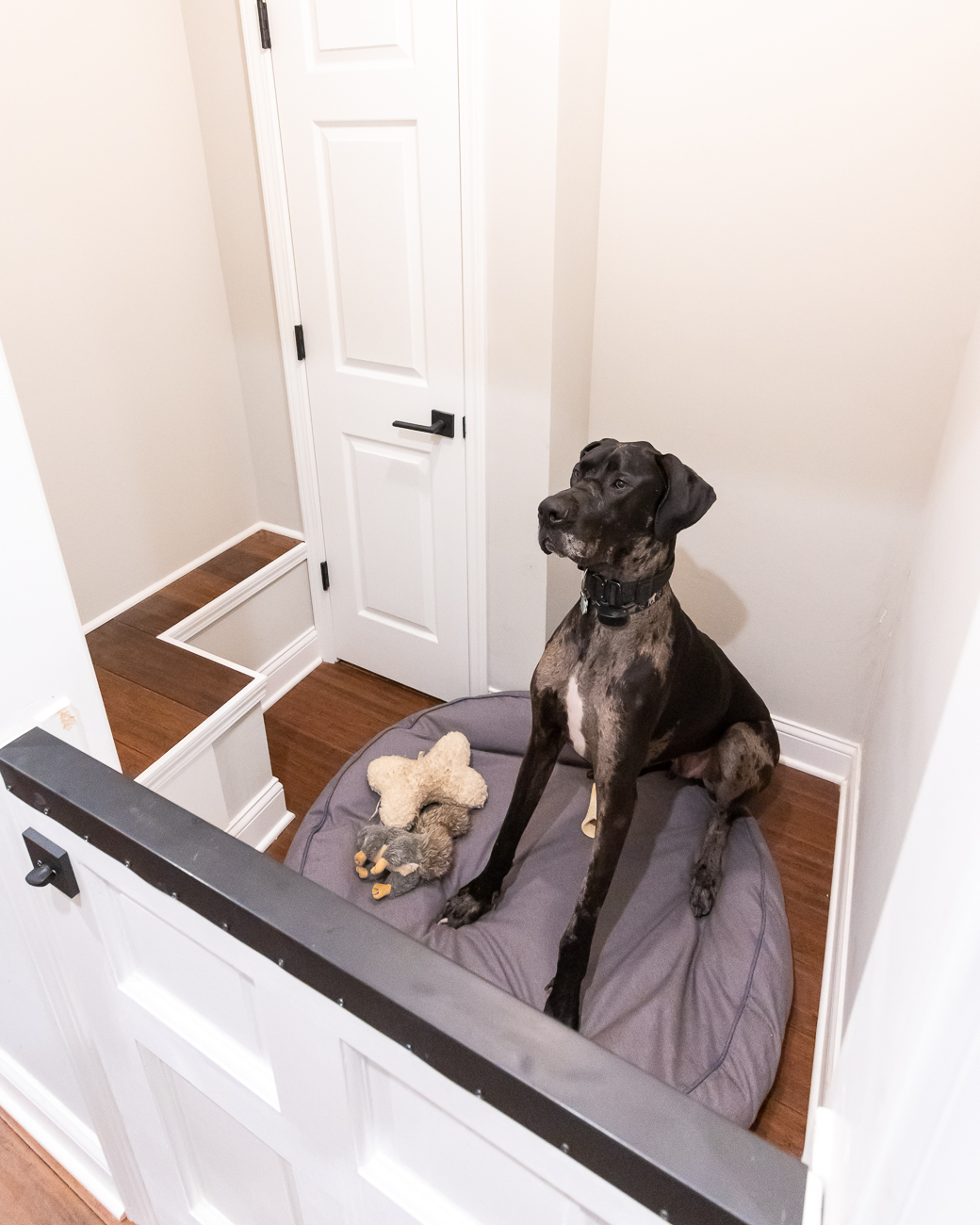 The new dog nook (big enough for a Great Dane) used to be where the furnace was located. The homeowner replaced the furnace and had the space converted. / Image: Phil Armstrong, Cincinnati Refined // Published: 6.5.20