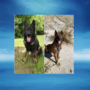 Retired K-9 Officers looking for loving homes